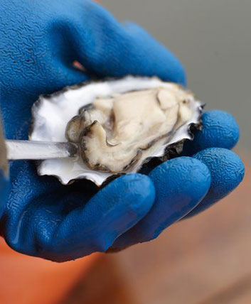 Purveyor Highlight: It's all about the Pacific Gold Oysters from Morro Bay Oyster Company